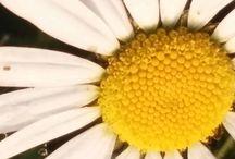 My foto (nature)
