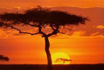 Desert Colours / by Michelle Sergeant