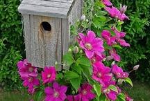 Birds & feeders