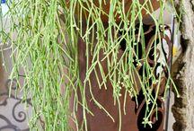 Piante Verdi per interni