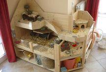 Morčata bydlení