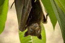 BATS / by Susan Langsett-Smith