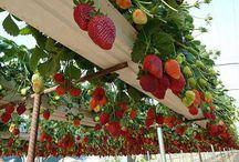 frukt og grønnsaker i beholdere