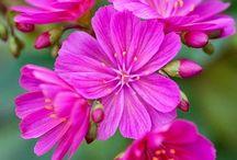 Belas flores: