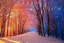 Winter scenes / by Cindy Goodman