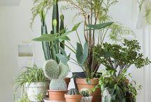 coin plantes
