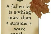 Fall / by Janine Winchester