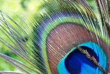 Birdthings