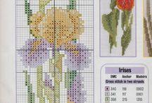 cs flowers iris