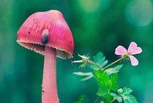 Gombák   Mushrooms