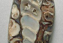 Λειασμένα απολιθώματα