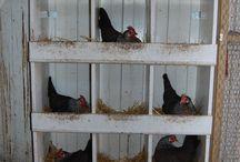 chicken nesting coop