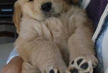 puppies and dogs =) / by Ashley Jemison