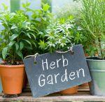 Grow Your Food Anywhere!