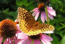 Start Small / Purchase a seed packet and create habitat in a small part of your yard....nature will thank you!