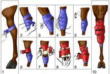 bandage or vrap