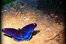 Butterfly /