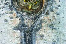 huuuhuuuuuuuuuu - some owls / mein Krafttier - sagt meine Schwester :o) / by Karin Schuhmacher