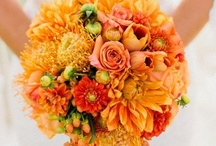 Orange, coral
