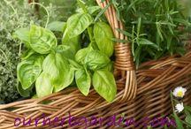 herbs /planting\ recipes