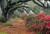 Book Setting - Charleston, SC / The Eugeena Patterson Mysteries is set in Charleston, SC.  / by Tyora Moody