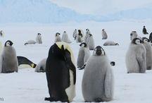 Evie's Antarctica assignment
