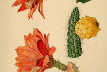 Ilustración cactus / by José Langella