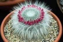 Grasso è bello / Cerco piante che sopravvivano alla sottoscritta