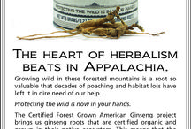 Print Ads & Posters / Creative designs from Mountain Rose Herbs, an herbs, health and harmony company / by Mountain Rose Herbs