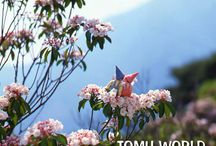 "TOMU WORLD / ""Tomu world"" is many works of photographer Tomu Nakamura."