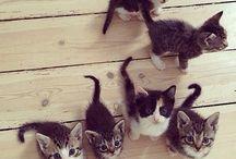Les mignon petit chaton