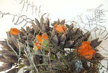 agave zaden / Zaden van agave. Met vilten tulpen