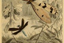 Compozitie cu insecte