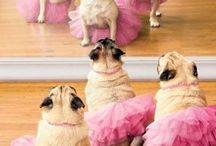 balet met pupie