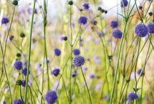 květiny foto