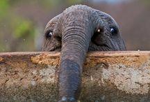 Elephants :) / by Missy Ferringo