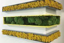 stabilized moss/vertical garten