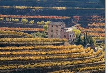 PRIORAT / One of the most wonderful and intriguing wine countries in the world !