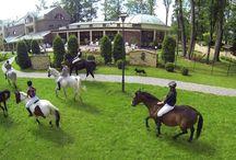 Konna przejażdżka w Manor House / Nasz chluba - konie