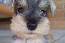Puppy!!!