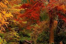 ősz / Őszi színek, a természet változásai.