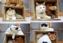 Animals do the funniest things... / by Karen Walker