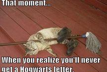 Harry Potter / by Kelsey Vaillancourt