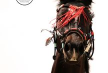 Accessories for Horses / Kappzaum, Showhalfter, Pferdezaum, Shootingzubehör.  Pferde, Cavesson