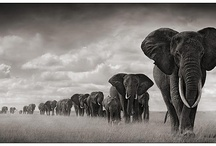 wildlife / by Dana Bee