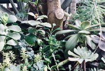 Plants / Succulents
