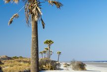 Cumberland Island: hiking, camping & backpacking adventures / Explore Cumberland Island on Georgia's southern coast amidst wild horses, gnarled trees draped with spanish moss, and Carnegie family mansion ruins.  http://www.atlantatrails.com/cumberland-island/