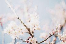 spring /