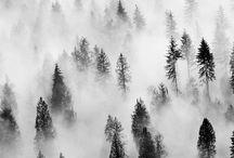 Fog / Tåke