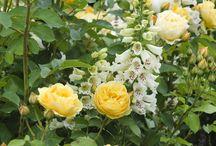 Palett - gul, vit, lila, rost